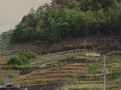 柏尾山についた柵
